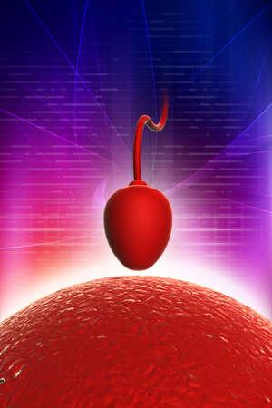 Sperm cell trying to reach an human ovum Stock Photo - 10952392
