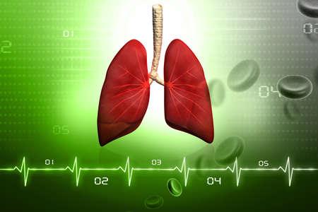 pulmon sano: Los pulmones humanos en el dise�o digital