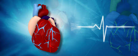 human vein heartbeat: Digital illustration of human heart in medical background Stock Photo