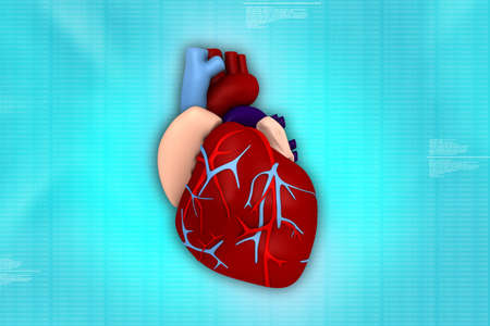 3d human heart in medical background photo