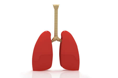 respire: Human lungs Stock Photo