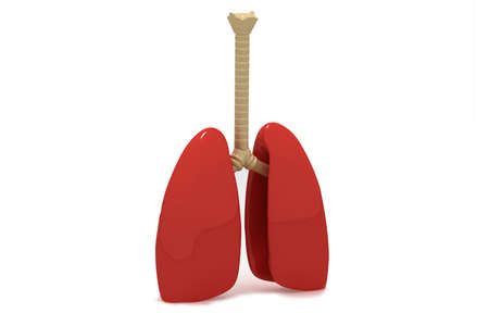bronchiole: Human lungs Stock Photo