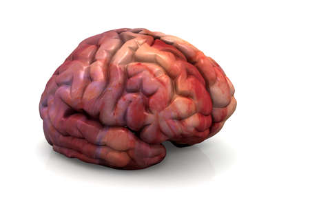 Human Brain Isolated  photo