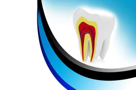 dental pulp: cross section of teeth