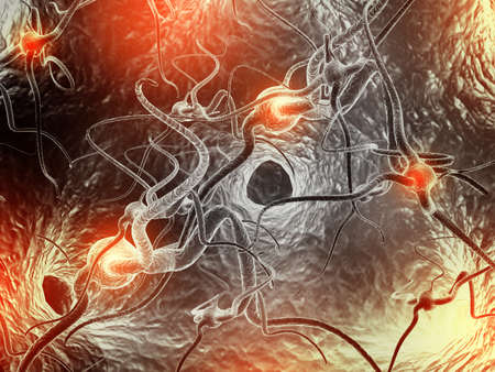 neural: Neuron  Active nerve cell in human neural system Stock Photo