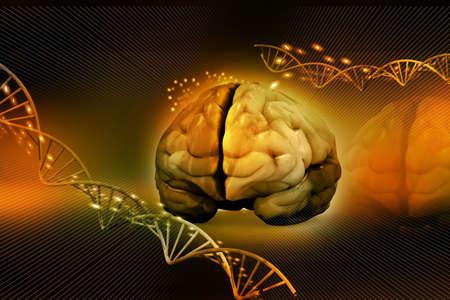 hemisphere: human brain and dna