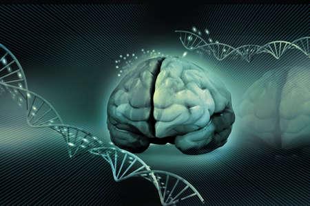 人間の脳と dna