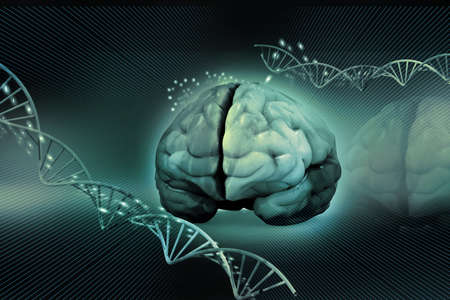 medical scans: human brain and dna
