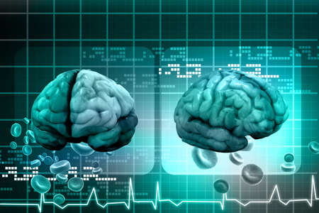 nerve cells: Human brain