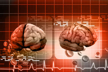 Human brain Stock Photo - 15403359