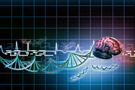 sistema nervioso central: Cerebro humano Foto de archivo
