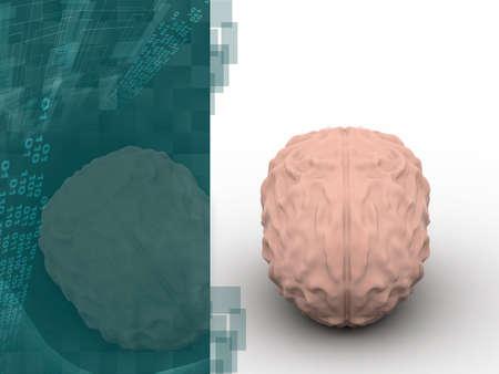 Human brain 3D model Stock Photo - 15797734