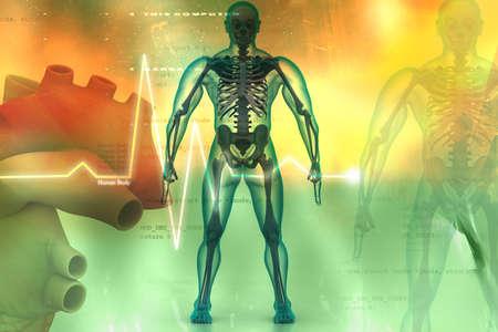 medical scans: Digital illustration of human body