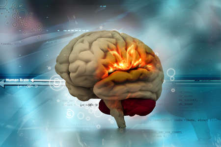 physiology: Human brain in abstract medical background Stock Photo
