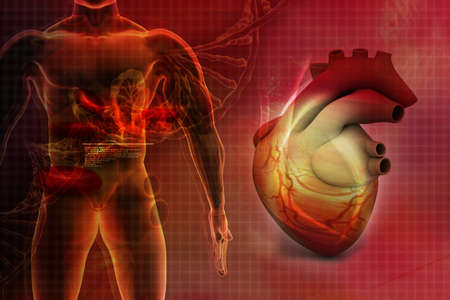 examination stress: Digital illustration of Human heart in abstract background Stock Photo
