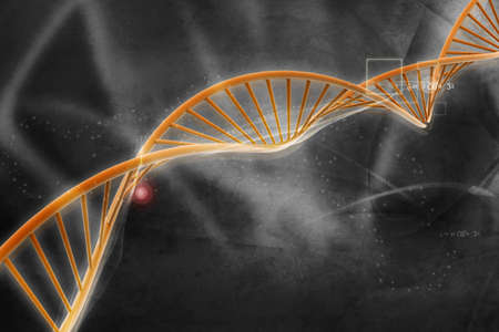 gene on a chromosome: Digital illustration of  DNA