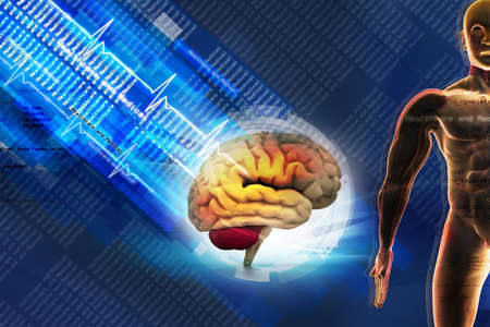 brain clipart: Human brain in abstract medical background Stock Photo