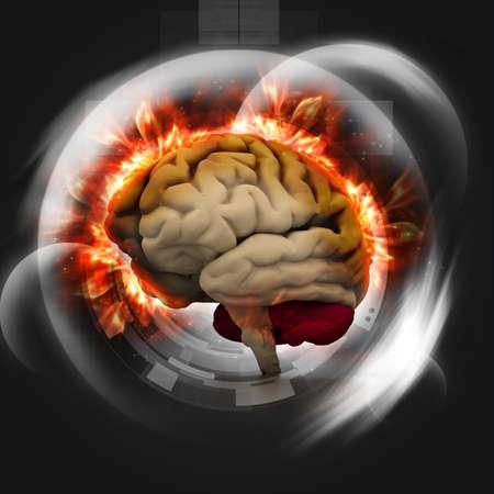 cerebral cortex: Digital illustration of human brain