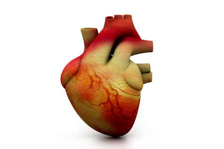 aorta: Digital illustration of human heart