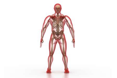 rheumatism: X-ray illustration of human body and skeleton Stock Photo