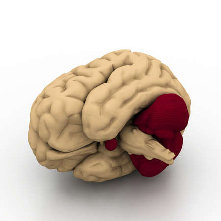 Human brain Stock Photo - 18309613