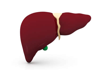 3d human liver in white background  photo