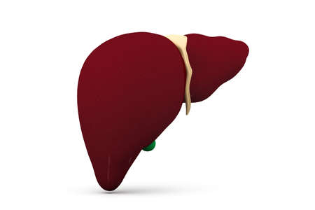 liver cirrhosis: 3d human liver in white background
