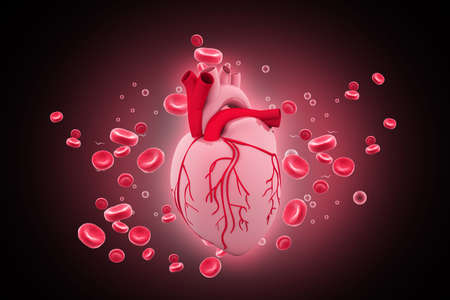 Human heart circulation cardiovascular system with blood cells