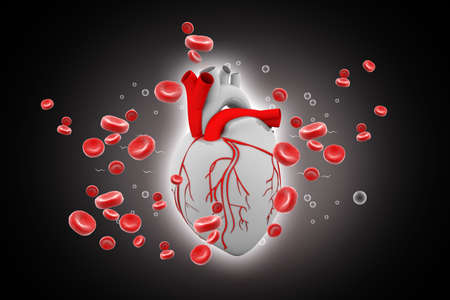 four chambers: Human heart circulation cardiovascular system with blood cells