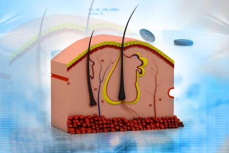 pore: Digital illustration of human skin anatomy Stock Photo