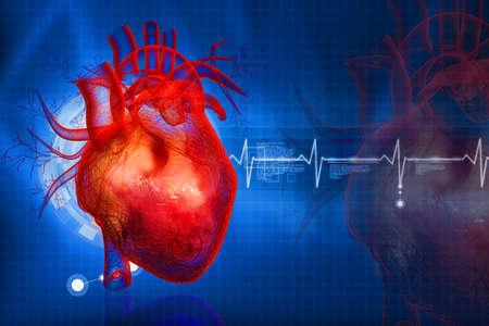 Das menschliche Herz Standard-Bild - 23648379