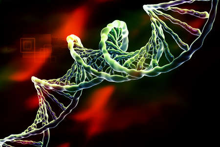 biochemistry: Digital illustration of DNA