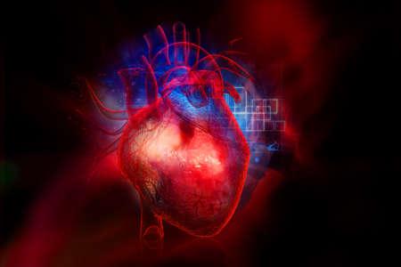 Coração humano Foto de archivo - 23635015