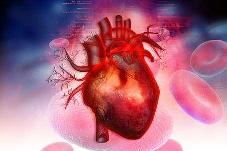 Human heart Banco de Imagens - 23648687