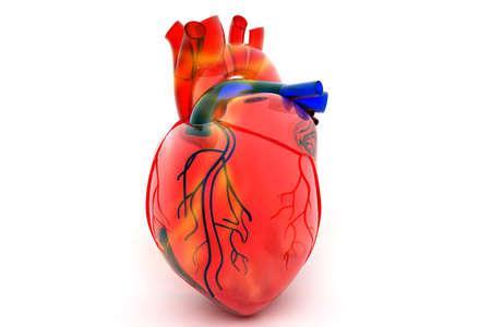 atrium: Human heart