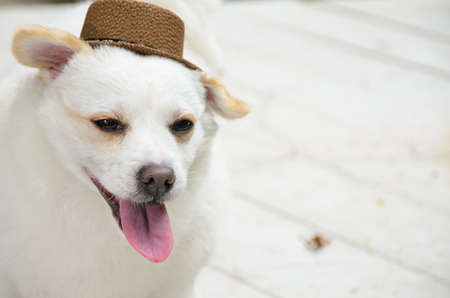 tricky: Tricky dog with hat