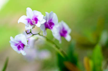 Orchid in garden photo