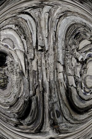 tree bark texture created photo overlays for an artistic look   photo