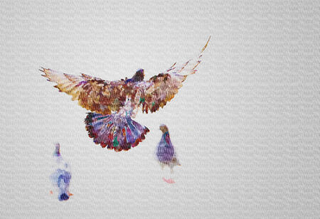 patch of light: Watercolor pigeons on white background