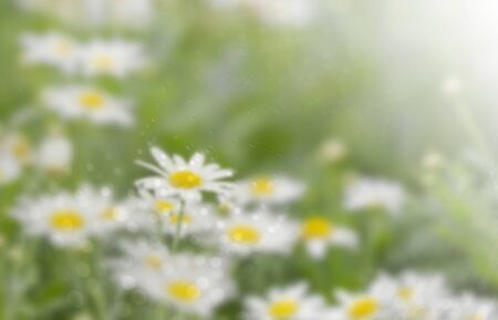 Blur background of white flower and bokeh.