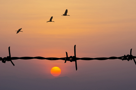 birds on a wire: Silhouette of Barbed wire and birds on sunset background.