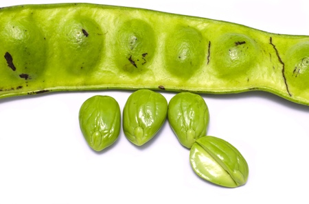 A photo of Parkia speciosa  scientific name  a kind of bean These beans are a favorite in the South of Thailand