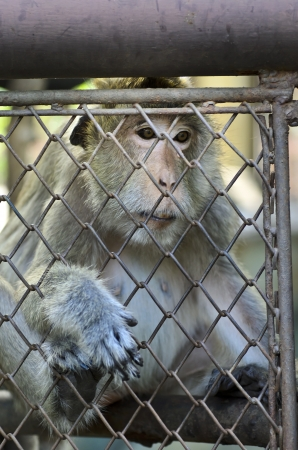A photo of monkey and cage. This photo was taken at Dusit zoo. photo