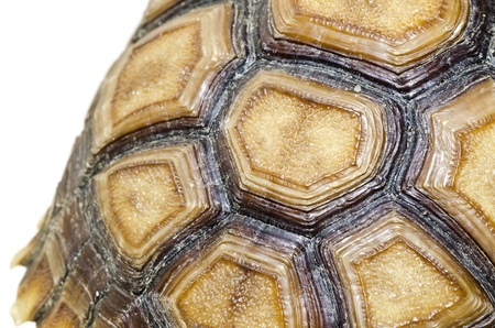 carapace: Turtle Carapace closed up picture. Stock Photo