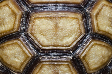 ancient turtles: Turtle Carapace closed up picture. Stock Photo