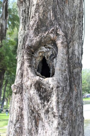 hole in pine tree photo