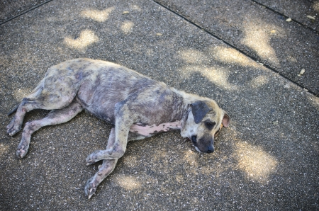 Stray dog laying on the concrete ground photo