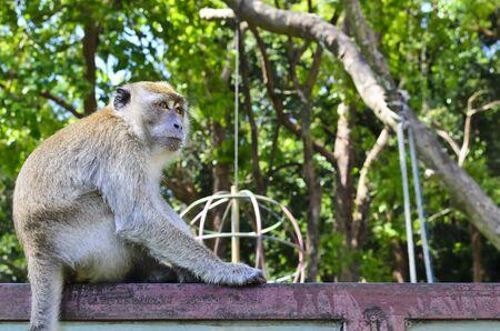 free monkey at Tang Kuan Hill songkhla thailand Stock Photo - 17602149