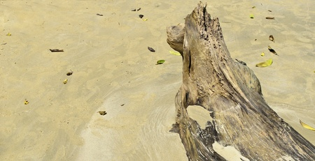 mook: Timber on the beach in emerald cave,koh mook, trang province,thailand