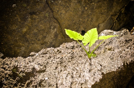 green plant on cliff at emerald cave,koh mook,trang,thailand photo